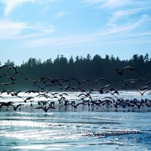 1000 vogels op canvas
